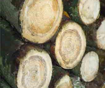 Keramisches Holz