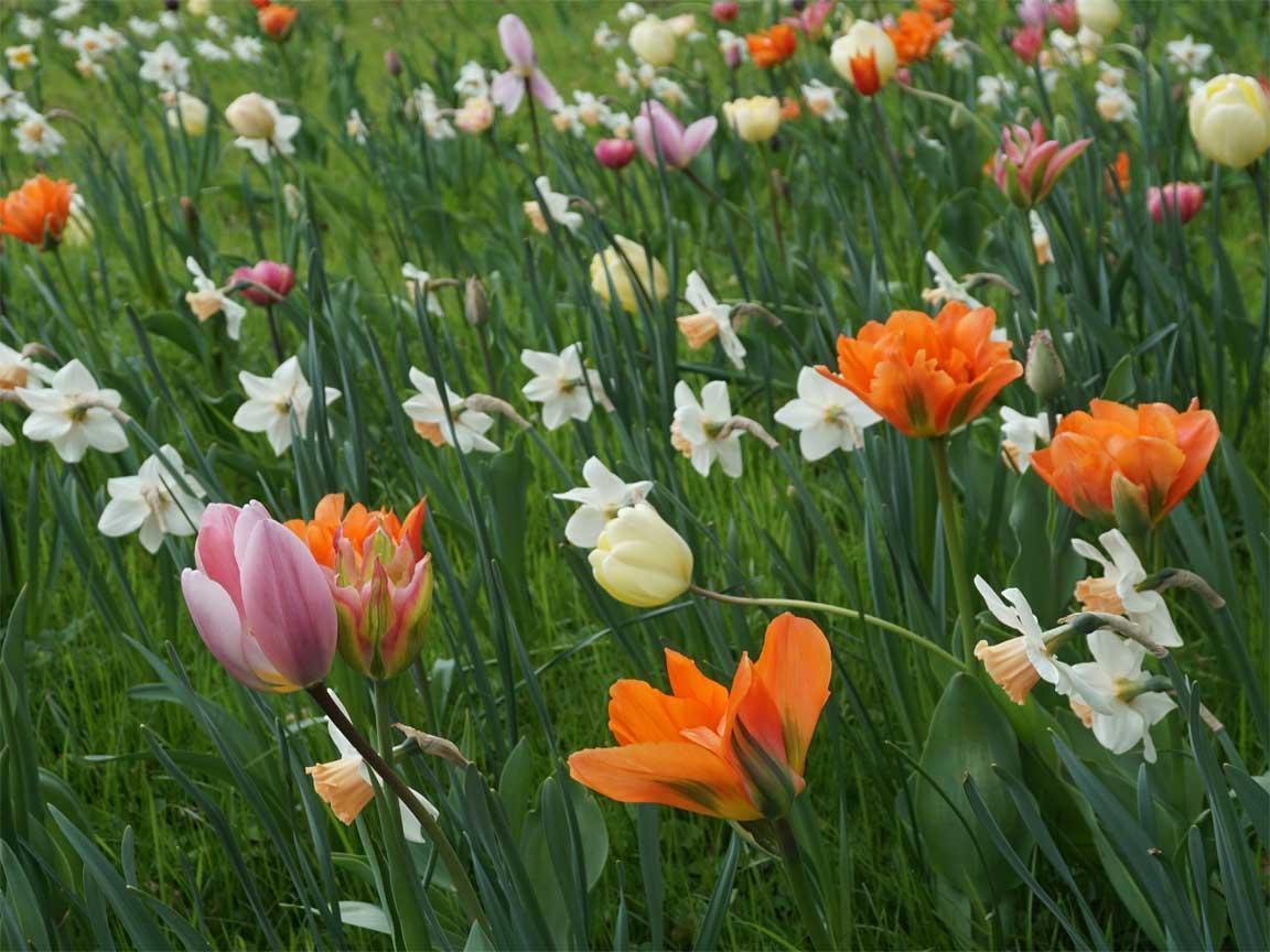 Wir freuen uns auf die Gartensaison ...